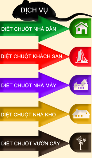 dich-vu-diet-chuot-tan-goc-300